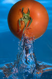 Pomodoro dall'acqua Fotografia Stock Libera da Diritti