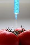 Pomodoro del GMO Immagini Stock