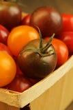 Pomodoro di ciliegia Immagini Stock