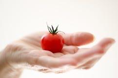 Pomodoro di ciliegia in mano di Womans Fotografia Stock