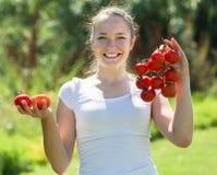 Pomodoro di raccolto della donna nel campo fotografia stock libera da diritti