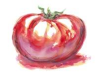Pomodoro di rosso dell'illustrazione dell'acquerello fotografie stock