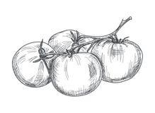 Pomodoro disegnato a mano sopra fondo bianco Fotografia Stock Libera da Diritti