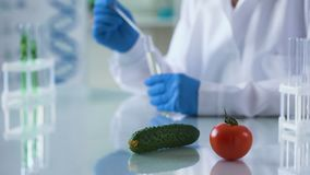 Pomodoro e cetriolo sulla tavola di ricerca, alimento geneticamente modificato, agricoltura archivi video