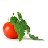 Pomodoro e fogli fotografia stock libera da diritti