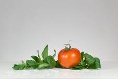 Pomodoro ed insalata freschi Fotografia Stock Libera da Diritti