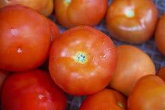 Pomodoro fresco Immagine Stock Libera da Diritti