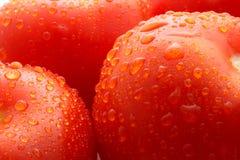 Pomodoro fresco Immagine Stock