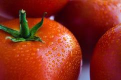 Pomodoro fresco su priorità bassa bianca Immagine Stock Libera da Diritti