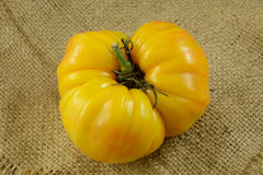 Pomodoro giallo di Heirloom immagini stock