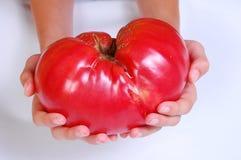 Pomodoro gigante del manzo Fotografie Stock Libere da Diritti