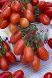 Pomodoro italiano della Sicilia Fotografia Stock Libera da Diritti