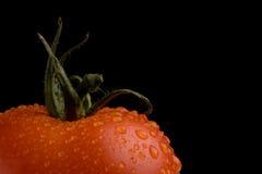 Pomodoro a macroistruzione Fotografie Stock