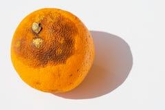Pomodoro organico al sole fotografia stock