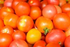 Pomodoro rosso Fotografie Stock