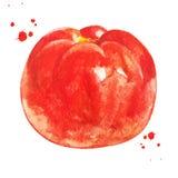 Pomodoro rosso con la spruzzata dell'acquerello Alimento sano immagine stock libera da diritti
