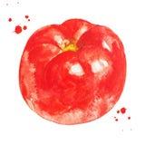 Pomodoro rosso con la spruzzata dell'acquerello Alimento sano Illustrazione disegnata a mano fotografia stock