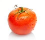 Pomodoro rosso con le gocce di acqua isolate su bianco Fotografia Stock