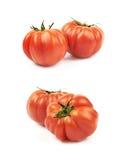 Pomodoro rosso maturo del manzo isolato Fotografia Stock Libera da Diritti