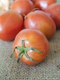 Pomodoro su tela di sacco Fotografia Stock