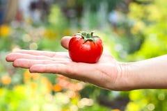 Pomodoro su una mano femminile fotografia stock