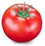 Pomodoro su una priorità bassa bianca Fotografie Stock