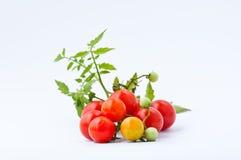 Pomodoro sui precedenti bianchi Fotografie Stock