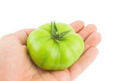 Pomodoro verde perfetto Immagine Stock