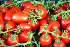 Pomodoro, verdure, alimento, ingrediente, organico Fotografie Stock Libere da Diritti