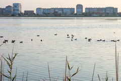 Pomorie - a city for the birds, Bulgaria Stock Images