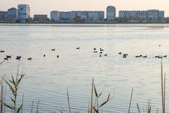 Pomorie - eine Stadt für die Vögel, Bulgarien Stockbilder