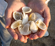 Pomorie: seashells from the Black Sea, Bulgaria Stock Photo