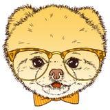 Pomorska psia głowa z szkłami i krawatem Wektoru modnisia szczeniaka odosobniona ilustracja ilustracja wektor