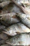 Pompanoes鱼catched与渔网 库存图片