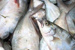 Pompanoes鱼catched与渔网 免版税图库摄影