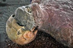 Pompeii ofiara Zdjęcia Stock