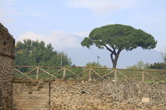 Pompeii. Property boundary wall with stone pine tree on upper level and misty image of Mount Vesuvius in background, Pompeii, Italy stock photography