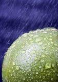 Pompelmo verde Fotografie Stock