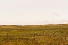 Pompes à huile sur un horizon éloigné Photographie stock