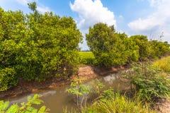 Pompi l'acqua dal canale alle risaie Fotografia Stock Libera da Diritti