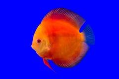 Pompidou-Fisch-Reihe Lizenzfreies Stockfoto