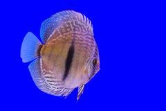 Pompidou-Fisch-Reihe Lizenzfreie Stockfotografie