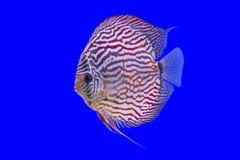 Pompidou-Fisch-Reihe Stockbild