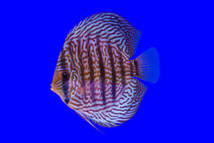 Pompidou Fish Photos stock