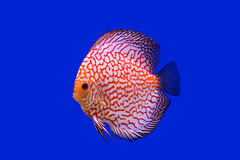 Pompidou Fish Photographie stock