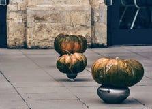 Pompkin, partido, Halloween, hokaido, colores, naranja, gris, nightmar, Fotos de archivo