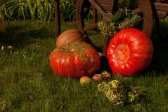 Pompoen, appelen en wiel Royalty-vrije Stock Foto
