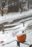 Pompoen in de Sneeuw in het Land Stock Afbeelding