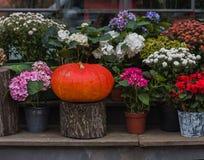 Pompoen en bloemen in bloempotten stock afbeelding