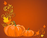 Pompoen-herfst-donker-schaduw Stock Foto's